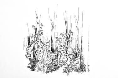 La futaie jardinée