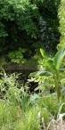Fraicheur à l'ombre des arbres